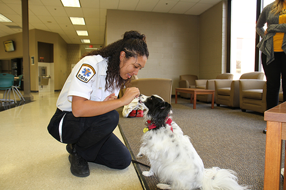 "At Anoka Technical College monthly ""Paws for Stress Relief"" event, student Cara Chitton feeds therapy dog Happy a treat."